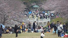 Leute genießen Kirscheblüte Betrachtung oder Ohanami in Takarano-Park in Tokyo stock video footage