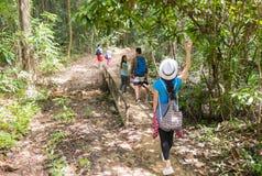 Leute gruppieren mit Rucksack-Trekking auf Forest Path Back Rear View-Weg auf Brücke, Mischungs-Rennjungen Männern und Frau auf W lizenzfreies stockbild