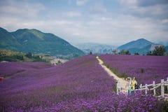 Leute im Lavendel-Feld-Park Stockbild