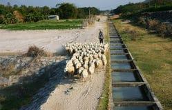 Leute lassen Herde von Schafen weiden Lizenzfreie Stockfotografie