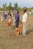 Leute mit Hunden lizenzfreies stockfoto