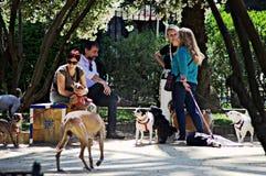 Leute mit Hunden Stockfoto