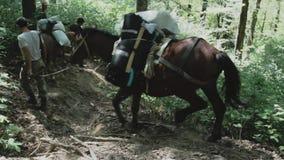 Leute mit Pferden auf der Gebirgsjagd stock video