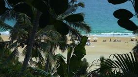 Leute, Palmen und der Strand stock footage