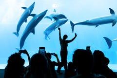 Leute passen die Delphine des Aquariums auf Stockfotos