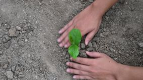 Leute pflanzen Bäume vom Draufsichtvideo 4 K stock video