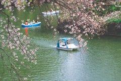 Leute reiten das Paddelboot in Chidorigafuchi-Kanal f?r das Betrachten von Cherry Blossom lizenzfreies stockfoto