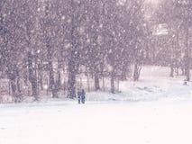 Leute, Schneesturm, Bäume Lizenzfreie Stockbilder
