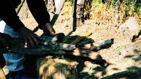 Leute schnitten Holz im Wald stock video footage