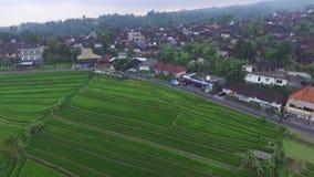 Leute sind auf Reisfeldern in indonesischem Dorf Balis stock footage