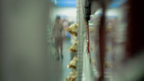 Leute sind im Supermarkt Reflexion in Plexiglas stock video