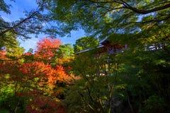 Leute an Tofukuji-Tempel sehen Herbstlaub Stockfoto