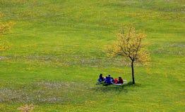 Leute und einsamer Baum Stockfotografie