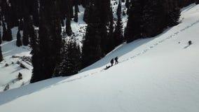 Leute und Hunde gehen in die Berge entlang einem schneebedeckten Weg unter den Tannen Langsam fliege ich oben auf das Brummen stock video footage
