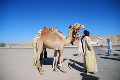 Leute und Kamele Lizenzfreie Stockfotos