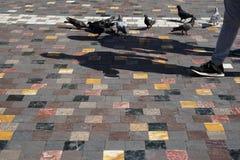 Leute und Tauben, die mit Formschatten auf buntem quadratischem Formmarmor-Beschaffenheitsboden im alten Stadtplatz gehen Stockfotos