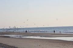 Leute und Vögel, die den Strand genießen stockbild
