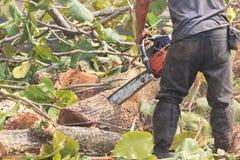 Leute verringern Bäume mit einer Kettensägenmaschine stockfotos