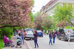 Leute werden gegen den Hintergrund von Kirschblüten fotografiert Stockfoto