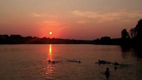 Leuteschwimmen im See stock footage