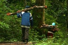 Leva o log das madeiras Foto de Stock Royalty Free
