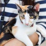 Leva um gato pelo proprietário e seu olho está olhando fixamente em alguma identificação Fotos de Stock