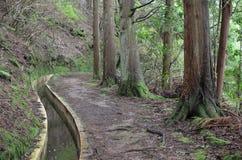 Levada острова Мадейры, типа оросительных каналов, Португалии Стоковое фото RF
