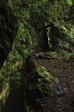 Levada Мадейра стоковые фотографии rf