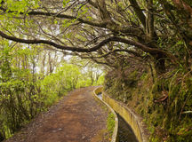 Levada auf Madeira stockbild