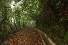 Levada auf Madeira-Insel Lizenzfreies Stockfoto