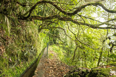Levada of Caldeirao Verde, Madeira, Portugal Royalty Free Stock Image