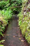 Levada canal filled with water in Madeira stock photos