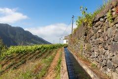 Levada, canale di irrigazione con l'escursione del percorso all'isola del Madera, Portogallo Immagine Stock Libera da Diritti