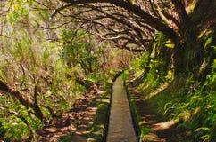 Levada de 25 Fontes na ilha de Madeira, Portugal Imagem de Stock Royalty Free