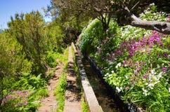 Levada de 25 Fontes na ilha de Madeira, Portugal Imagens de Stock Royalty Free