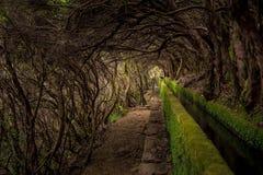 Levada de Madeira Imagens de Stock Royalty Free