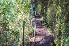 Levada di Caldeirao Verde, Madera Fotografia Stock