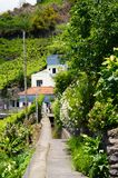 Levada do Norte, Madeira island - Portugal. Levada do Norte, Madeira island, Portugal Stock Images
