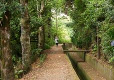 Levada do Norte near Boca da Encumeada on Madeira Island. Royalty Free Stock Images