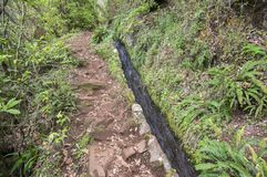 Levada do Poco Bezerro, wild water, touristic hiking trail, Ribeiro Frio, Madeira island stock images