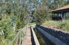 Levada dos托诺斯:Camacha的Monte,灌溉运河的类型,马德拉岛,葡萄牙 免版税库存照片