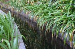 Levada dos托诺斯:Camacha的Monte,灌溉运河的类型,马德拉岛,葡萄牙 库存照片
