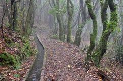 Levada dos Cedros: Fanal to Ribeira da Janela, type of irrigation canals, Madeira, Portugal.  royalty free stock image