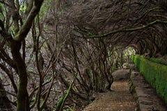 Levada entre arbustos en el bosque Foto de archivo libre de regalías