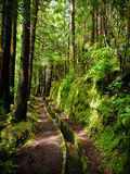 Levada Faial Azores. Beautiful view of levada on Faial island in the Azores Stock Photo