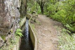 Levada Forado, touristic hiking trail, Ribeiro Frio, Madeira island, Portugal. Levada Forado, touristic hiking trail, Ribeiro Frio, Madeira island, green jungle Stock Photos