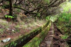 Levada hiking path Madeira royalty free stock photo