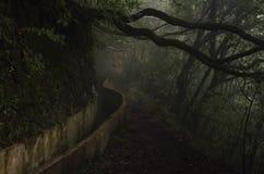 Levada Madeira Lizenzfreie Stockfotografie