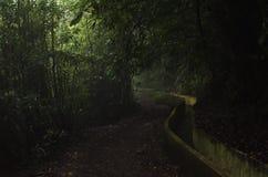 Levada  Madeira Royalty Free Stock Photo