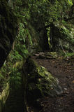 Levada Madeira royalty free stock photos